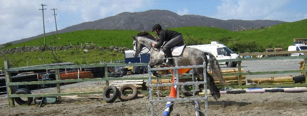 Top Class Connemara Ponies For Sale