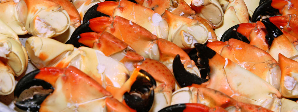 Renvyle Fisheries Products - Crab Claws